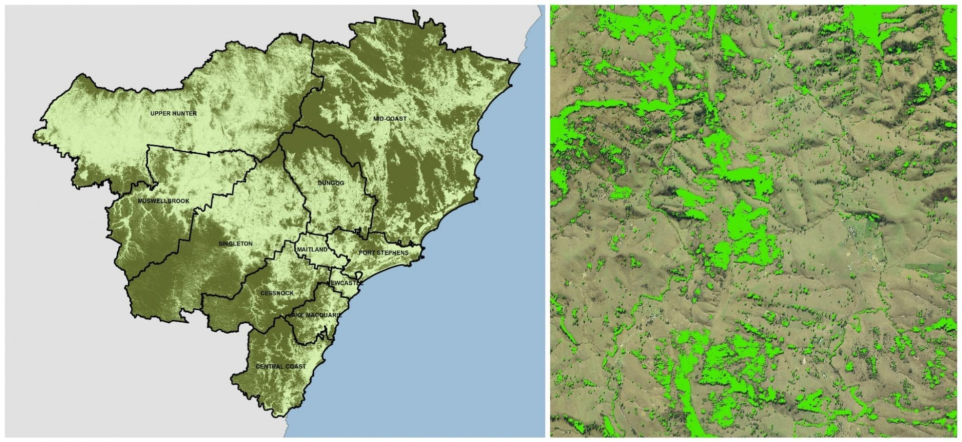 Featured Mapping – Woody Vegetation